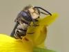 Hymenoptera - Hautflügler