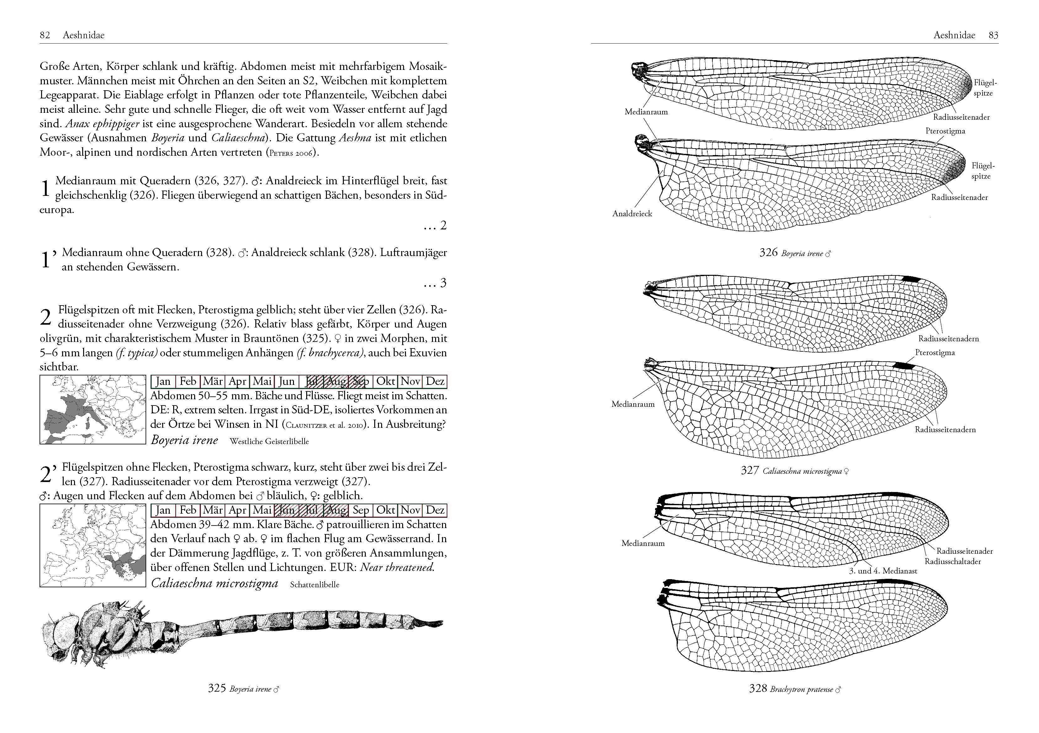 Leseprobe - DJN Libellen-Bestimmungsschlüssel Lehmann/Nüß, Seite 82/83